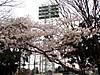 03zkomazawa8
